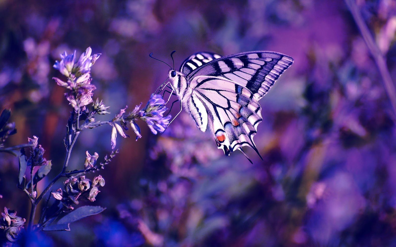 50 Beautiful Butterfly Wallpapers Free Download In Hd And 4k