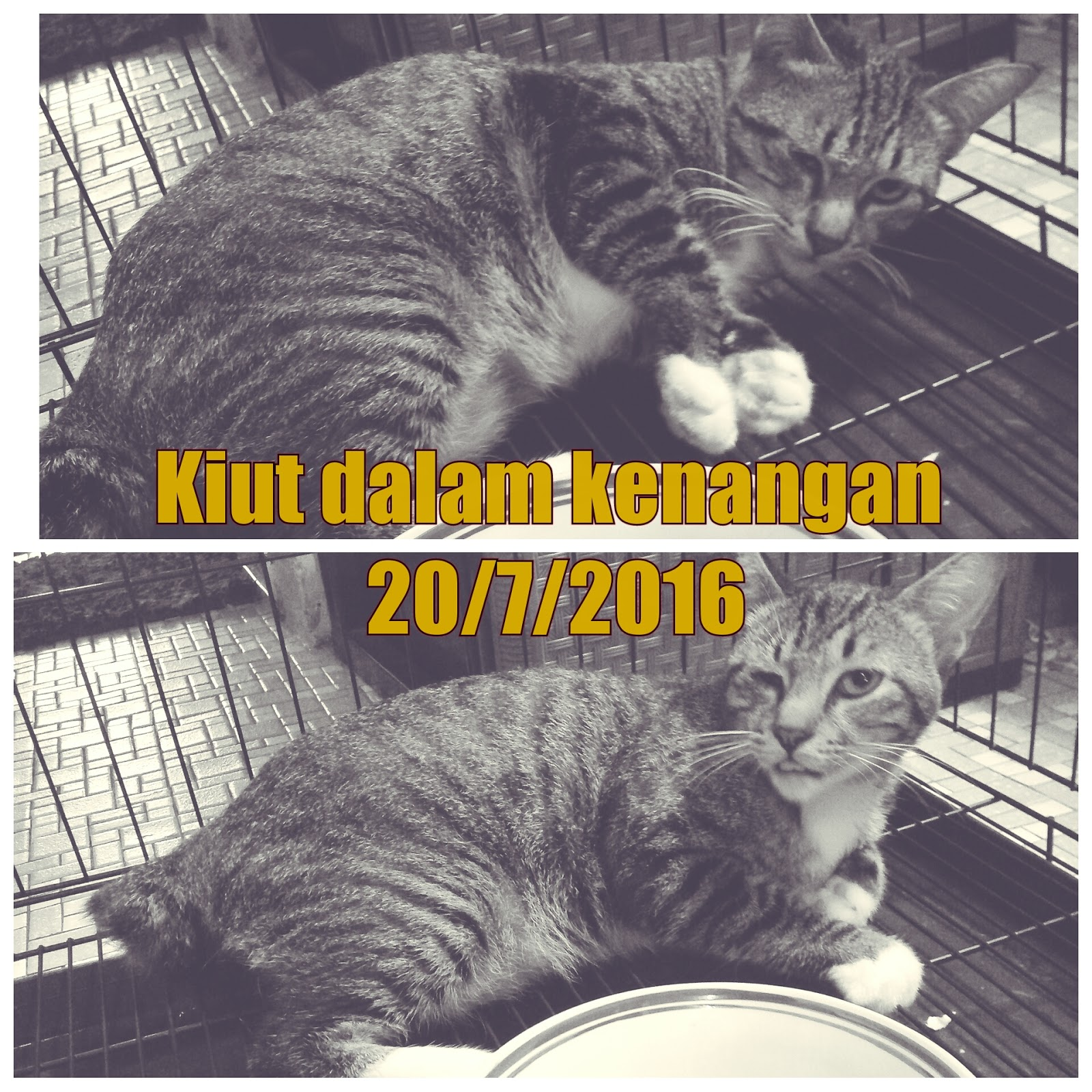 Corat Coret Nusha Kucing Ke 20 Dimandulkan Kiut