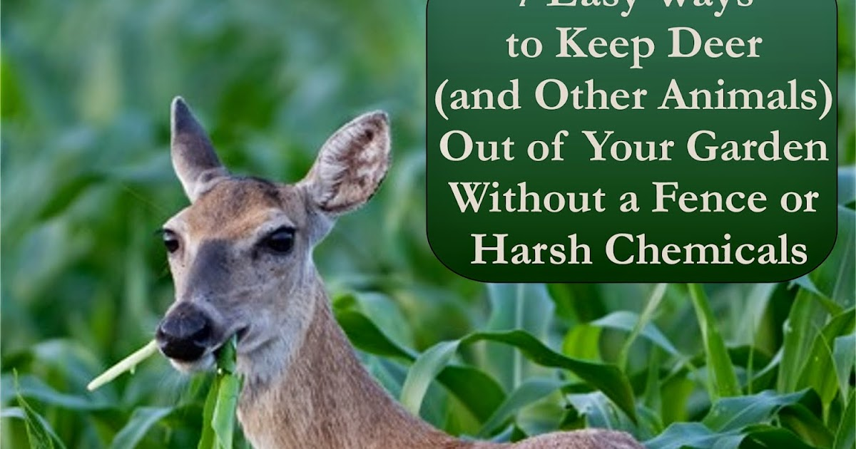 Florassippi girl 7 easy ways to keep deer and other - How to keep animals out of your garden ...