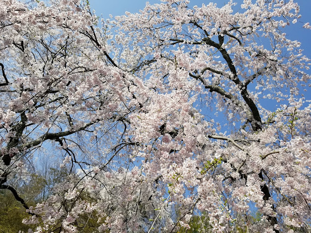 Laguna, Templo Tenryu-Ji, jardín zen Tenryu-Ji, Kyoto, Kioto, Japón, Japan, Elisa N, Blog Viajes, Lifestyle, Travel, TravelBlogger, Blog Turismo, Viajes, Fotos, Blog LifeStyle, Elisa Argentina, Cerezos