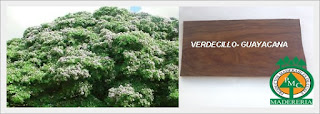 verdecillo-guayacana-maderas-exoticas-maderabales-cuale-vallarta