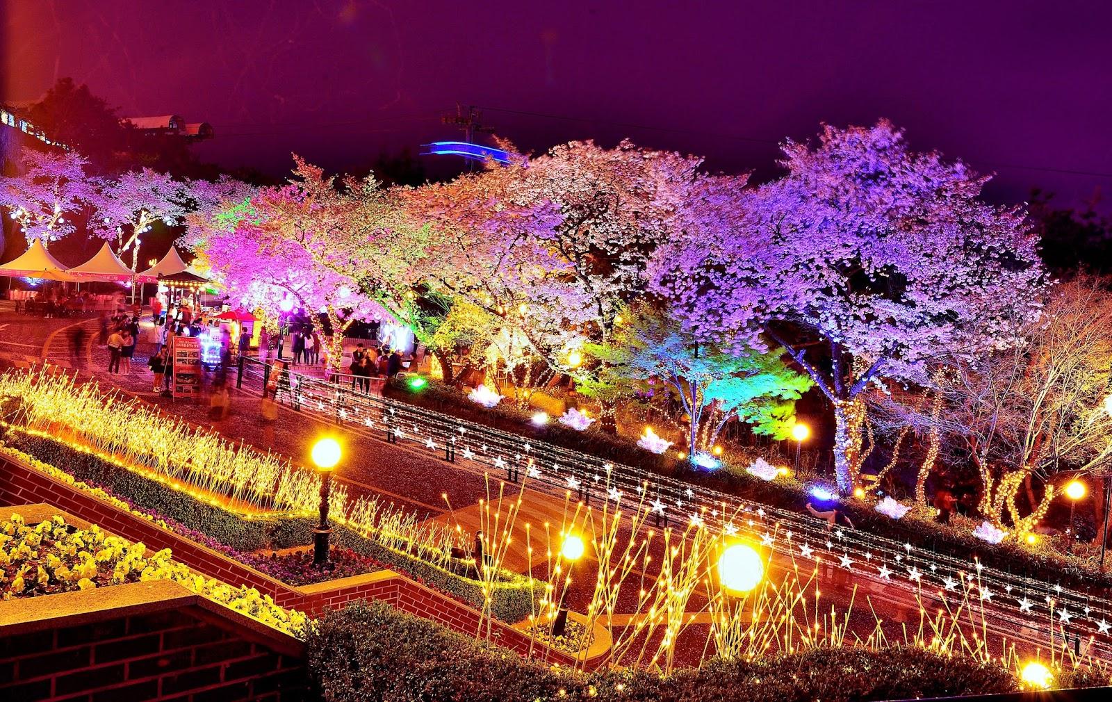 cherry blossom festival - 1024×647