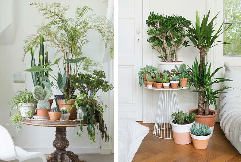 ottobre, le piante rientrano in casa | dettagli home decor