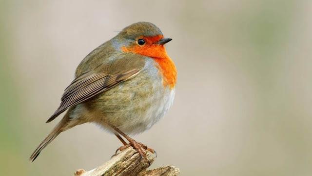 Científicos descubren cómo los pájaros pueden ver los campos magnéticos de la Tierra
