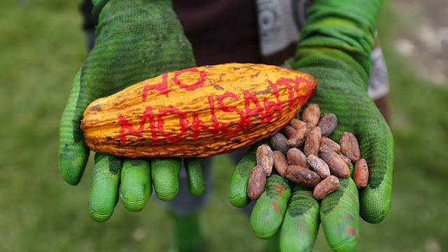 México, un mercado de 537 millones de dólares para Monsanto
