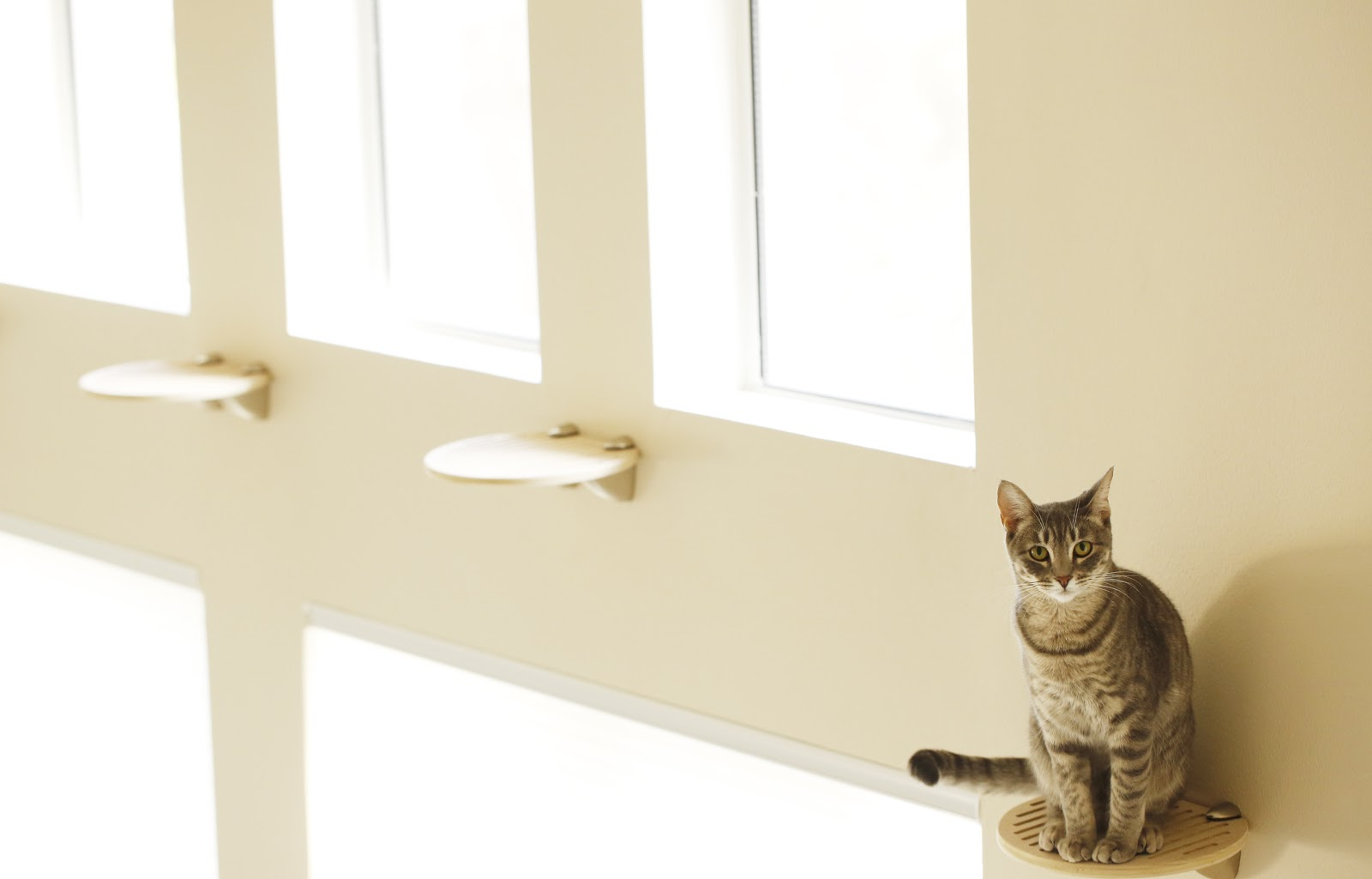 Affordable Cat Shelves Giggly Cats Happy Cats Happy Life