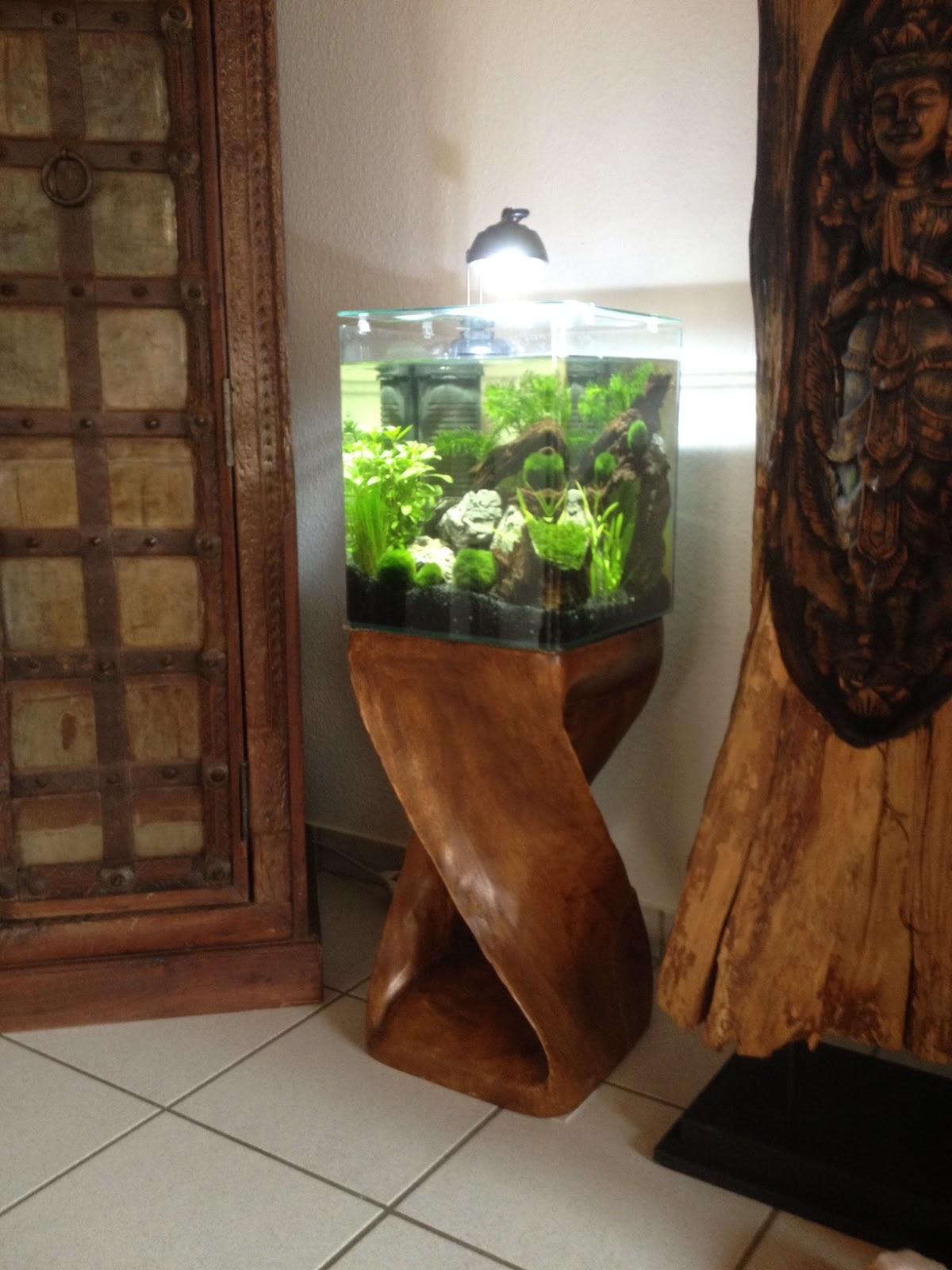 aqua ambiente blog nano aquarium at home. Black Bedroom Furniture Sets. Home Design Ideas