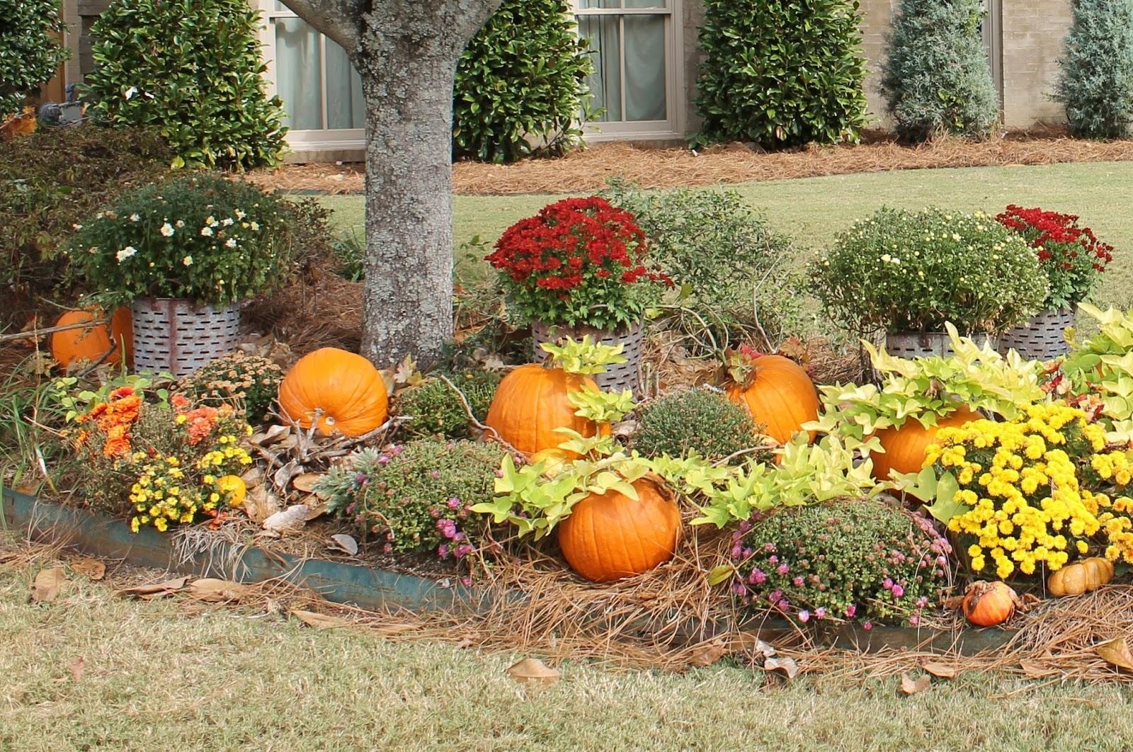 Fake A Front Yard Pumpkin Patch Miss Kopy Kat