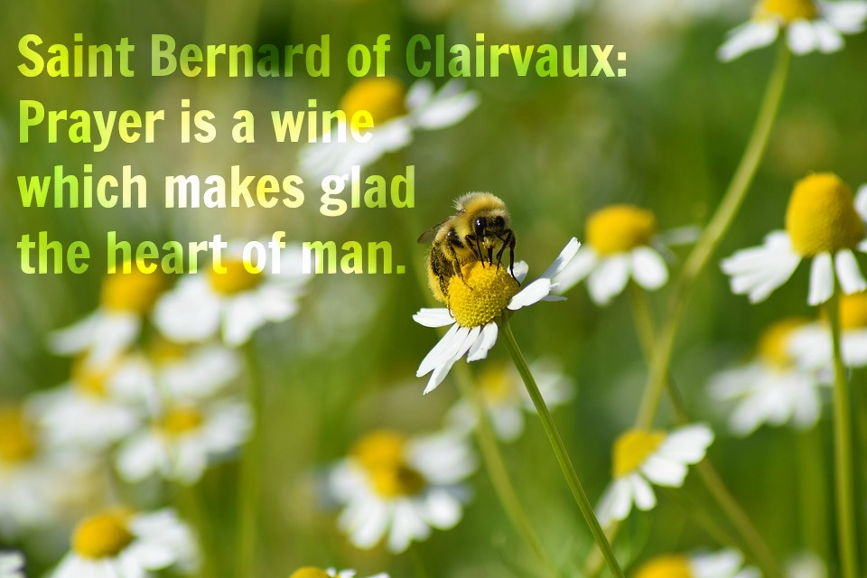 St Bernard Of Clairvaux Quotes: Pinot Noir And Prayers: Saint Bernard Of Clairvaux: Prayer