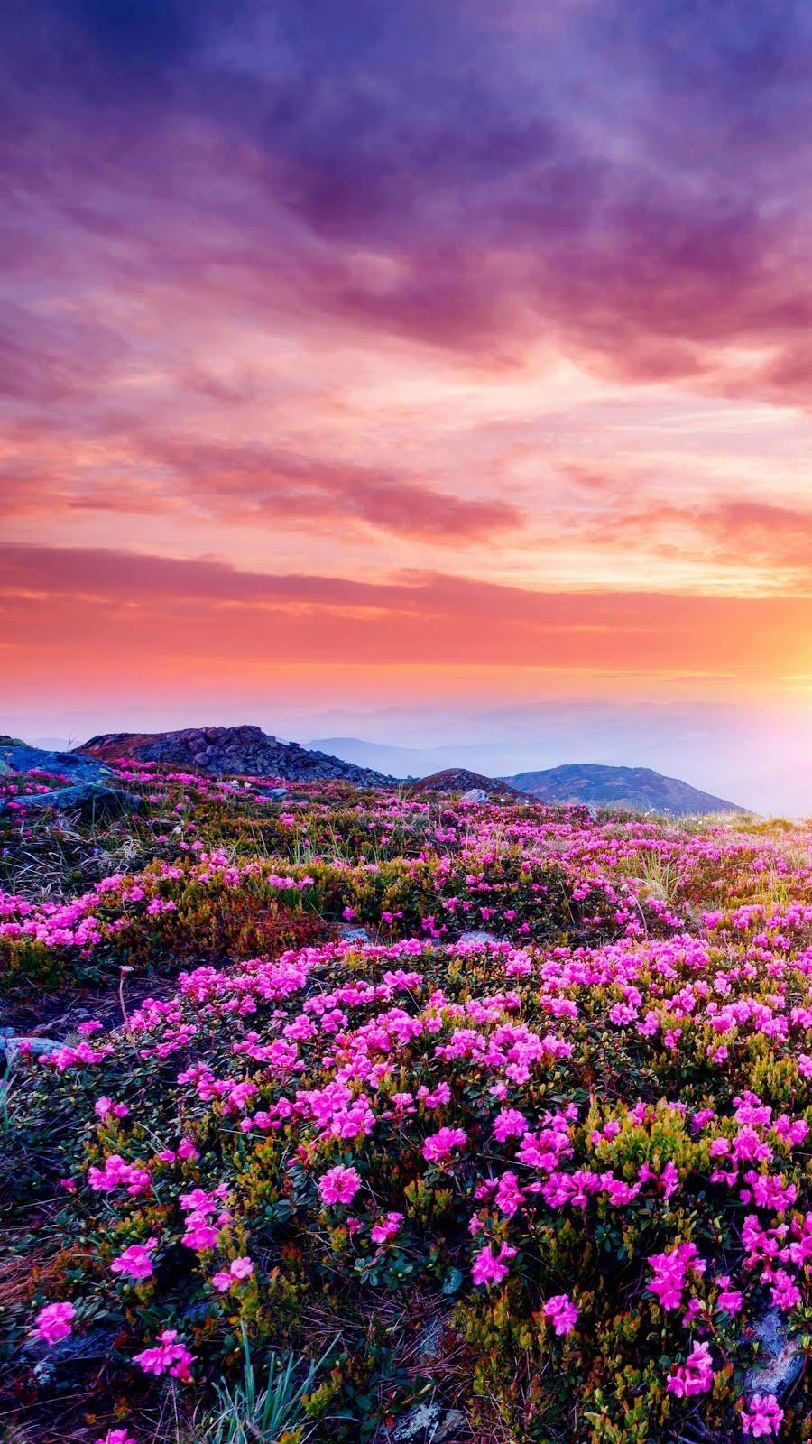 Pembe gökyüzü ve pembe çiçekler