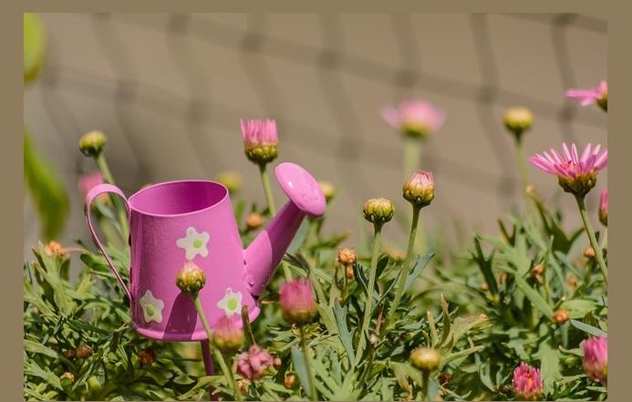 Best Gardening Gadgets to Aid Better Growth of Garden