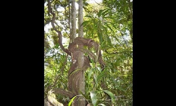 Terkejut dengan bunyi bising dalam pokok besar, lihat apa yang telah ditemui oleh warga emas ini...