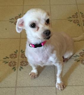 Lexi, pre-adoption circa 2016