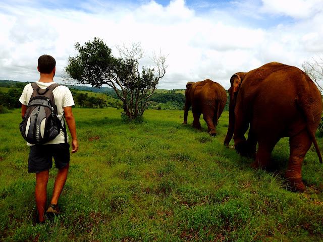 ver elefantes camboya