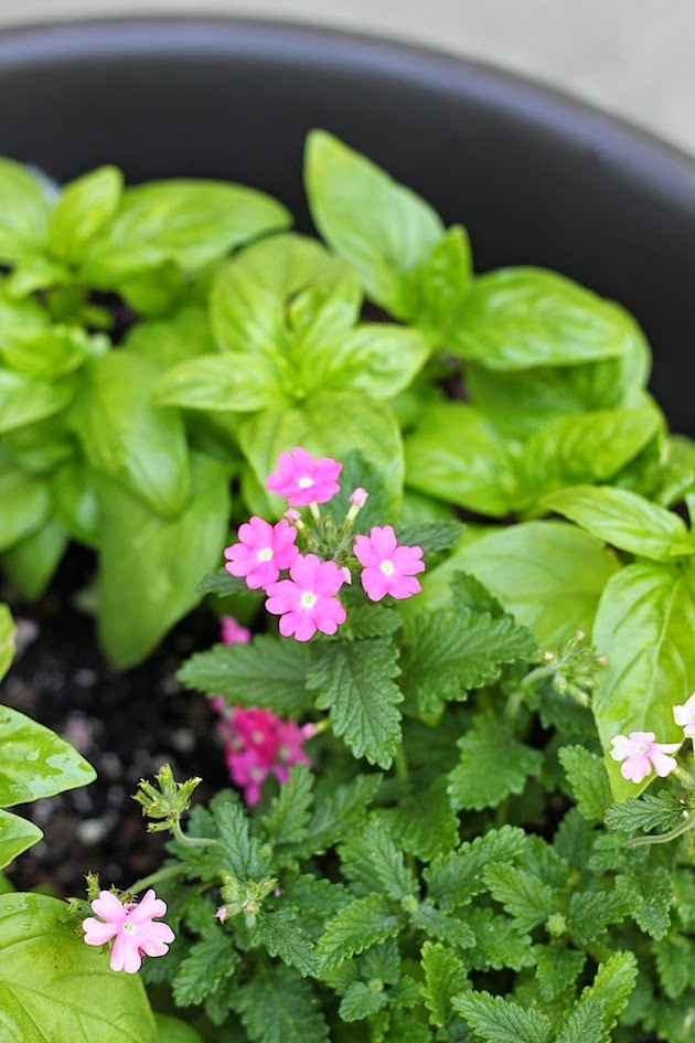 How To Plant Your First Herb Garden | Savor Home