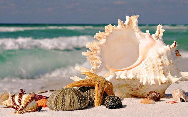 Foto met schelpen op het strand in de zomer