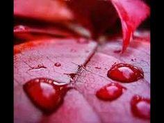 Ploaie roșie