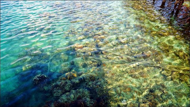Pulau Labun Si Jernih Untuk Snorkelling
