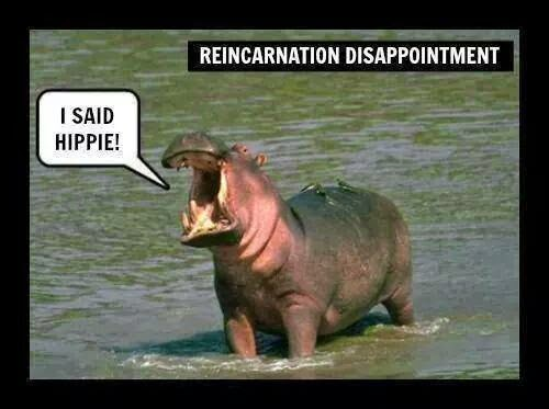 Funny reincarnation disappointment hippo joke picture - I said hippie!