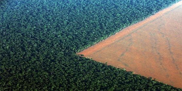 интересный факт про вырубку лесов на нашей планете