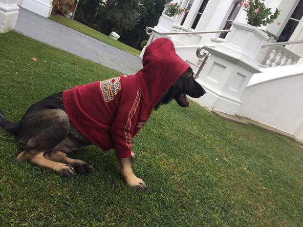 Chú chó cảnh sát bị sa thải vì một lý do vô cùng đáng yêu