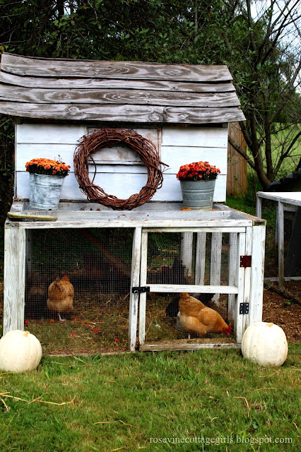 Backyard Chickens, Backyard Ducks, Hobby Farm, Coops