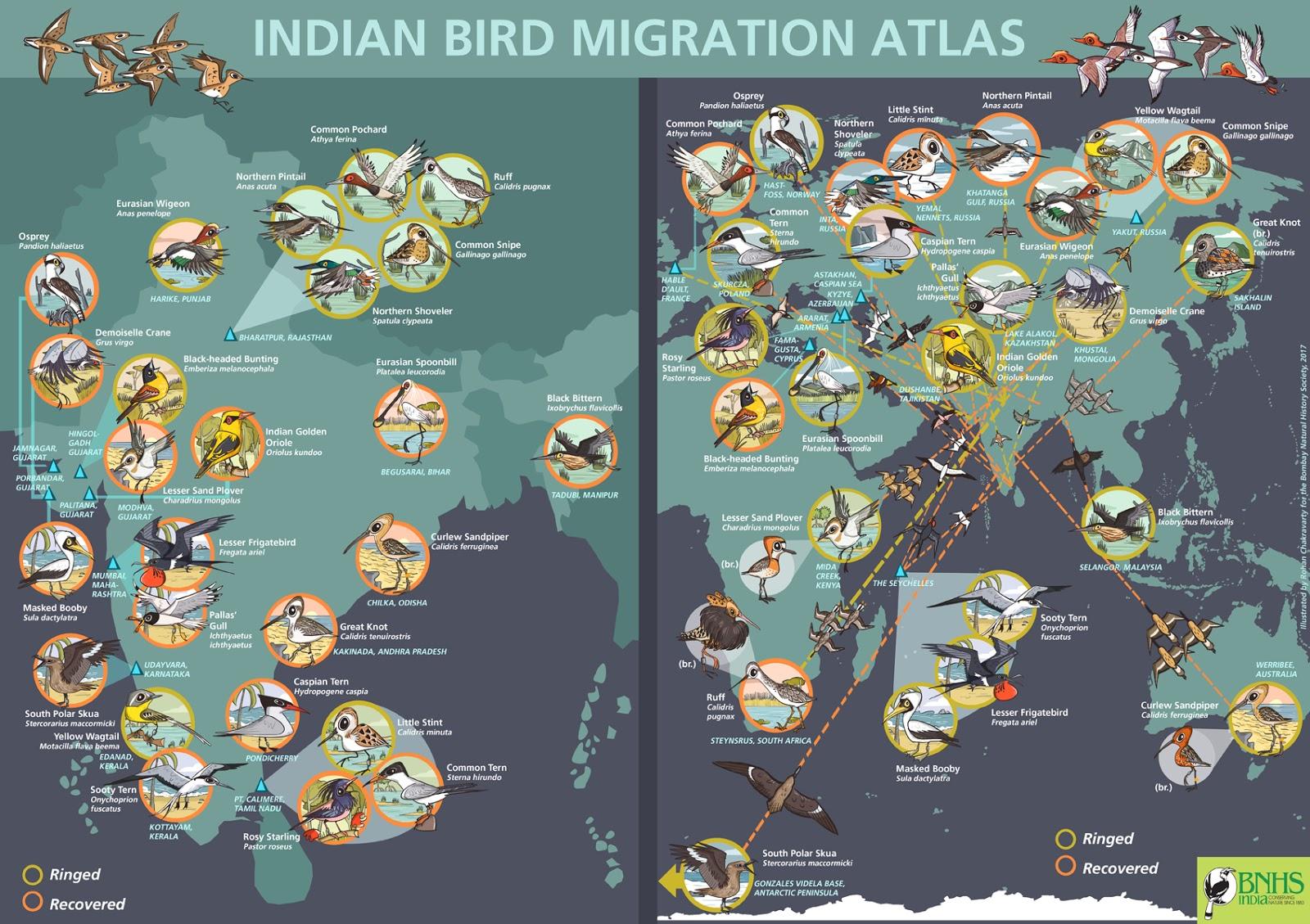 Green Humour: BNHS Bird Migration Atlas