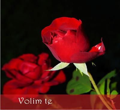 """Ako se zaljubljujete ovih dana, jednom crvenom ružom ćete reći najlepše """"Ja te volim""""."""
