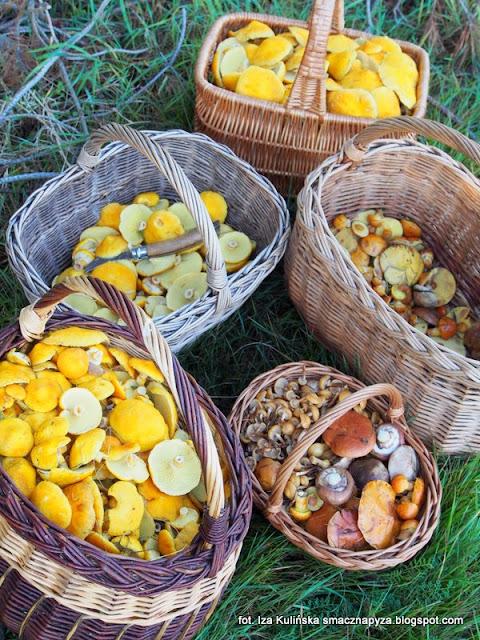 pazdziernikowe grzybobranie, borowce dete, maslaki, na grzyby, cale kosze grzybow, kosze na grzyby