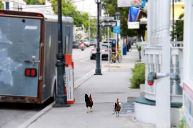 Key West on niin rento, että kanatkin kävelee kaduilla