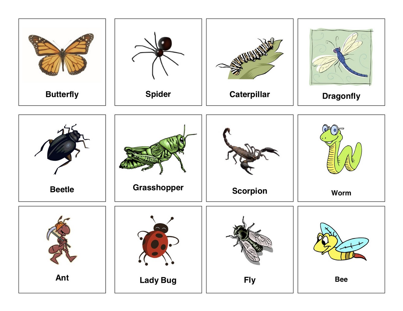 Insects And Bugs Names