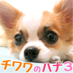 my dog hana 3