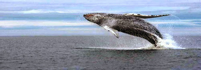 Best 10 places to watch whales in the world