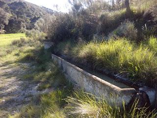 Abrevadero Fuente del Carasol, pinares de Zuera