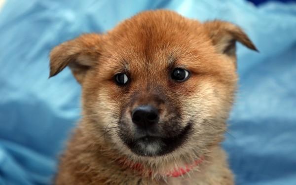 Bệnh vàng da ở chó và cách chữa trị hiệu quả