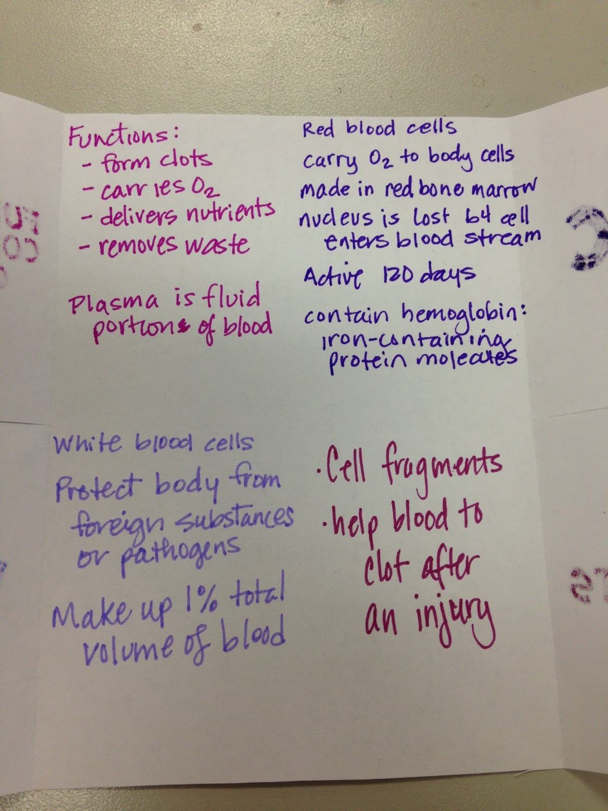We Teach High School Circulatory System Foldables