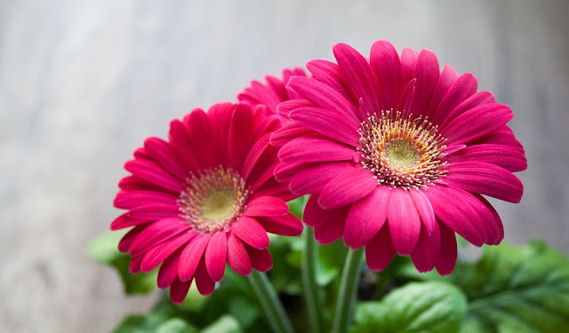 How Flower Help Cancer Patients?