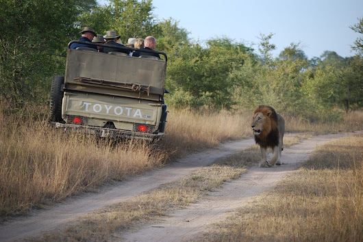 African Tour – Discover Why The Safari Is A Life Changer