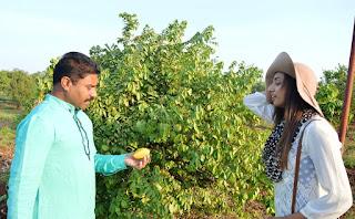 organic fruit farming India