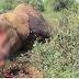 """จิตใจทำด้วยอะไร!! จะๆคาตา """"นักล่างาช้าง"""" นั่งคร่อมอยู่บนตัวช้างลงมือตัด """"งา"""" สดๆ จู่ๆเกิดเรื่องไม่คาดฝัน """"ฉากสยอง""""ก็บังเกิด!!? เวรกรรมมีจริง!? (ชมภาพ)"""