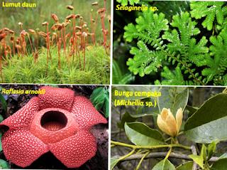 Pembagian Persebaran Flora di Indonesia Bagian Barat atau Asiatis