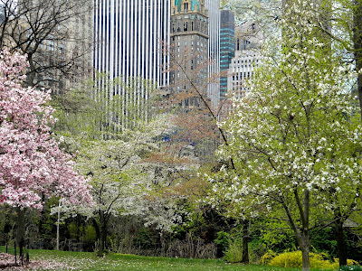 Central Park Spring New York City
