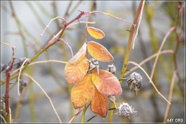sương tuyết còn đọng lại trên lá cuối tháng 9