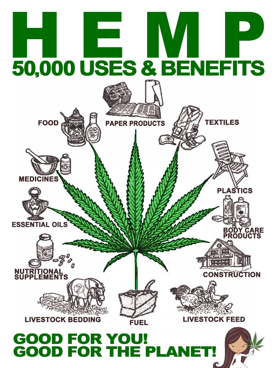 Legal Cannabis Consumers Private Club In Barcelona