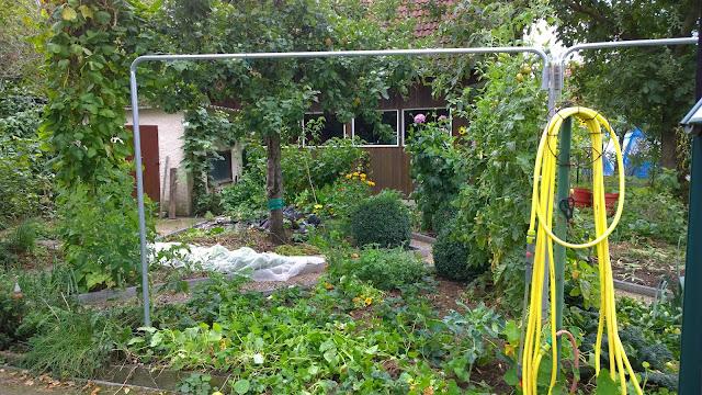 die Tomaten sind jetzt weg  (c) by Joachim Wenk