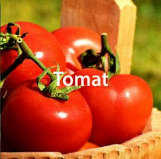 Teknis Budidaya Tomat