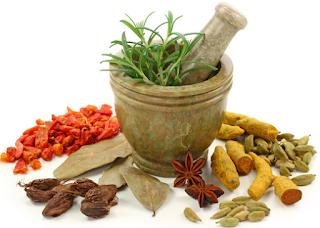 Tanaman herbal obat kencing nanah dan sipilis
