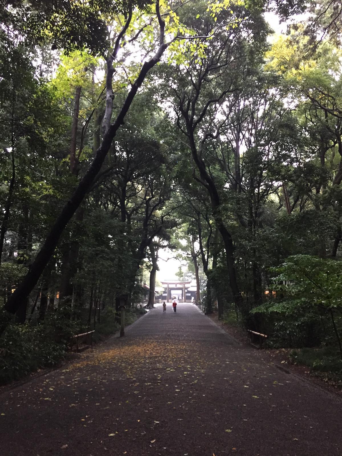 Tokyo Travel Guide  yoyogi park