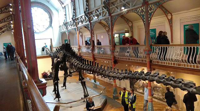 Dippy the dinosaur on tour in Dorchester
