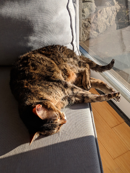 image of Sophie the Torbie Cat napping on a chaise beside a window, through which sunlight is streaming